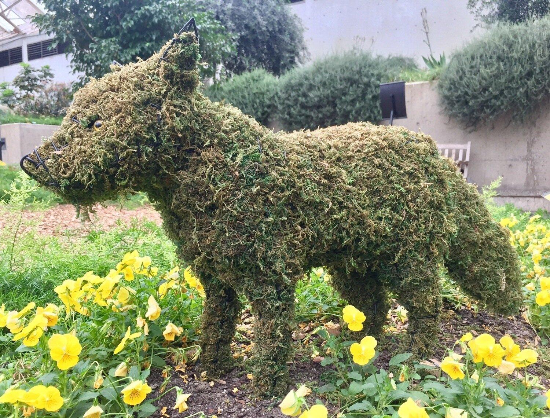 Fox Topiary