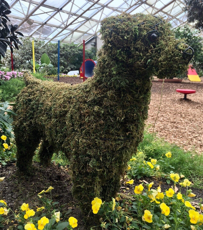 Labrador Retreiver Topiary