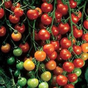 Tomato, Cherry/Grape, Super Sweet 100 F-1