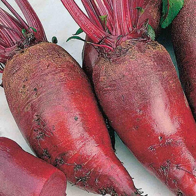 Beets Heirloom Cylindra