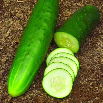 Cucumber Heirloom Straight Eight