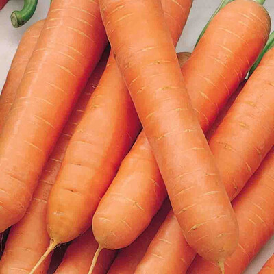 Carrots Jumbo Heirloom Scarlet Nantes