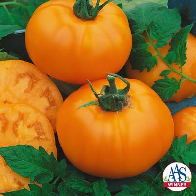 Tomato Chef Choice Orange