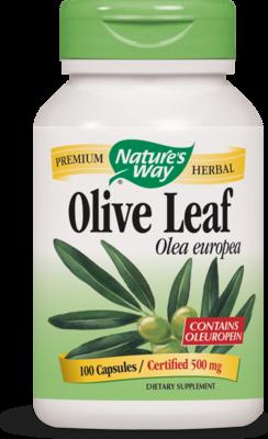 Olive Leaf Olea europea
