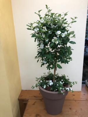 Terraspot mix in groene pot 30cm h 95cm