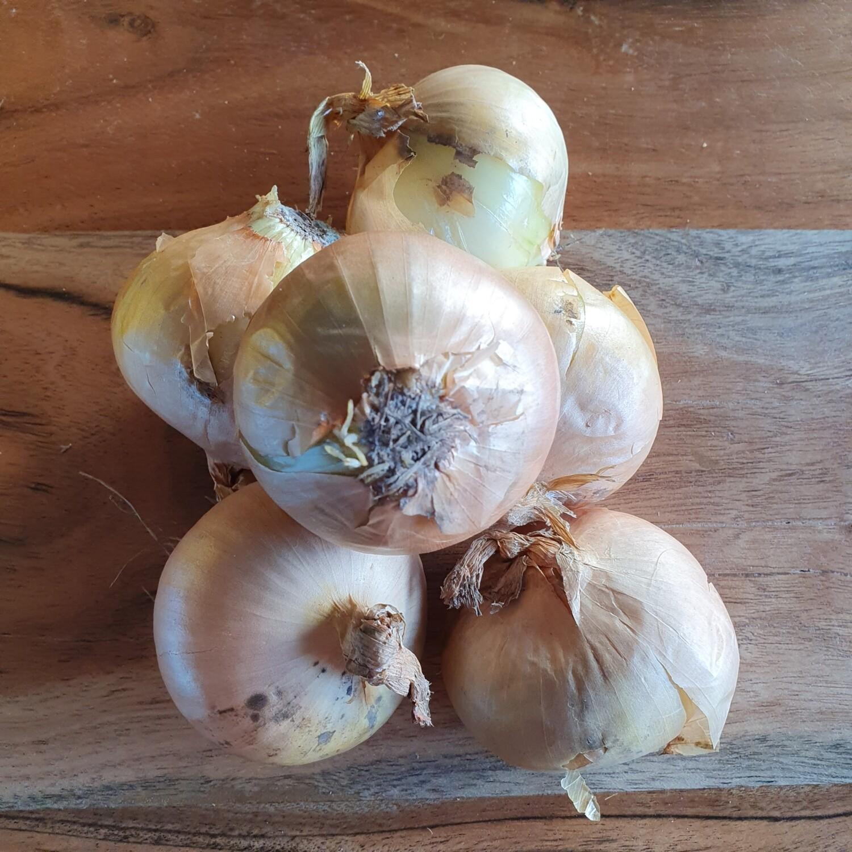 Organic Onions 300g