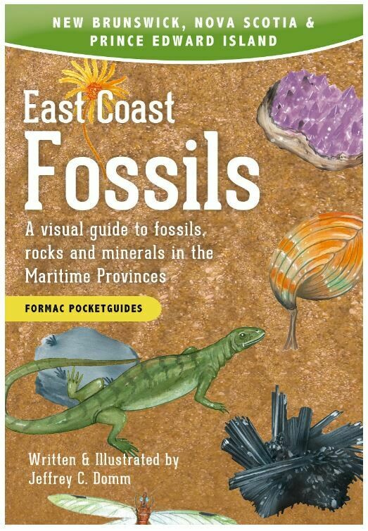 East Coast Fossils