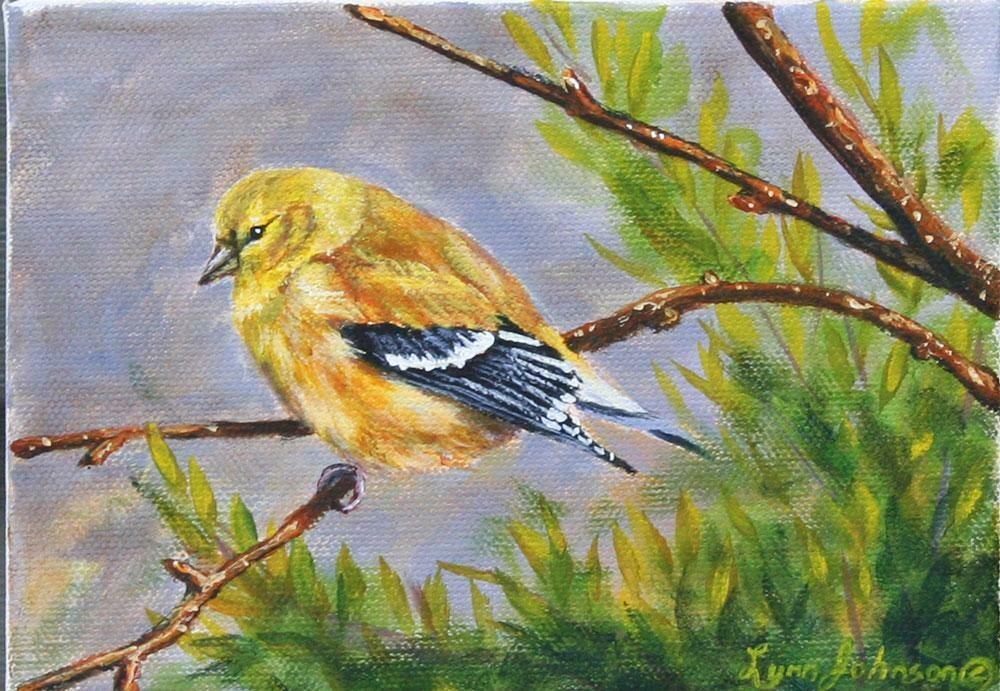 Mellow Yellow (female goldfinch) 5x7