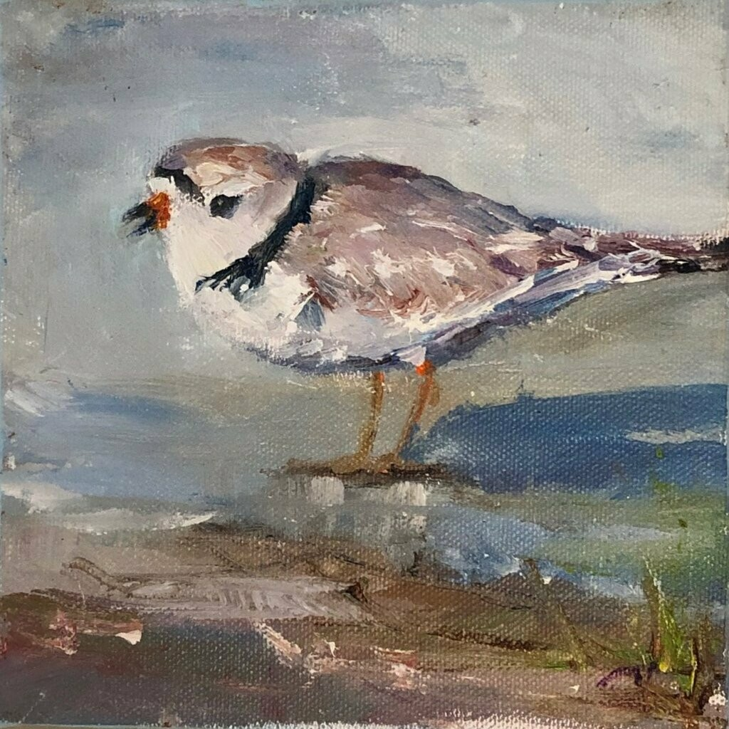 Oh Shore, Plover