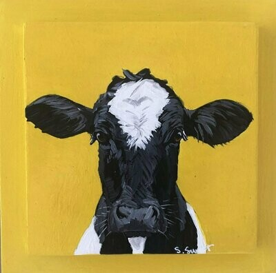 Holstein on yellow