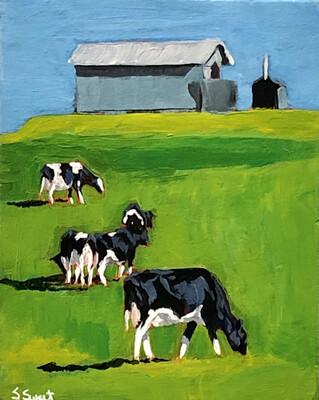 Nova Scotia Farm & Cows