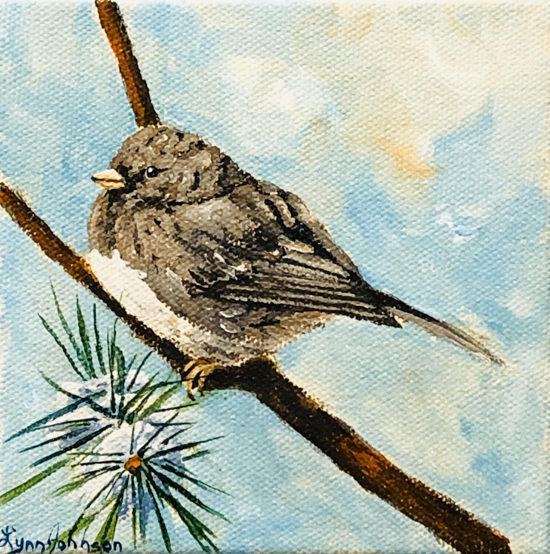 Snow Bird #16, Junco 5x5