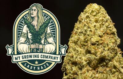 My Growing Company - LADY HAZE