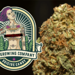 My Growing Company - SUICIDE CANDY