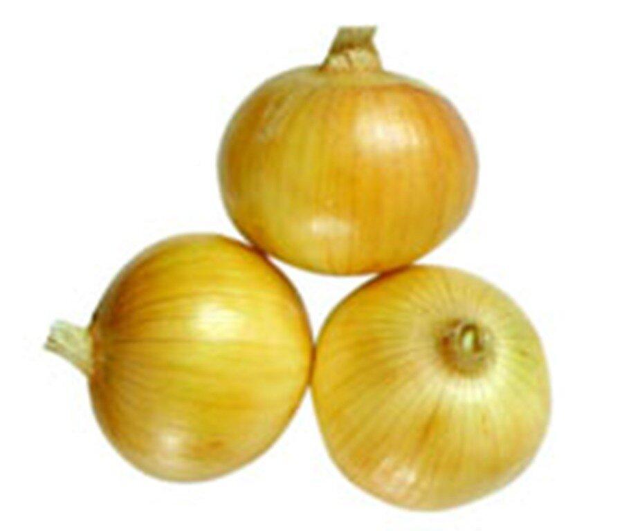 Yellow Onion黃洋蔥