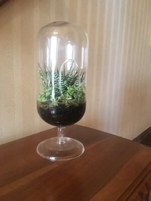 Terrarium Glass Container