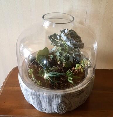 Terrarium Succulents
