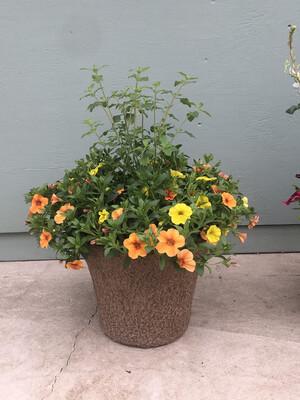 Robinson Planter - Full Sun