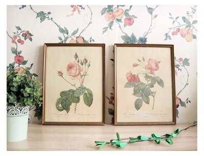 Cuadros Vintage Botanical