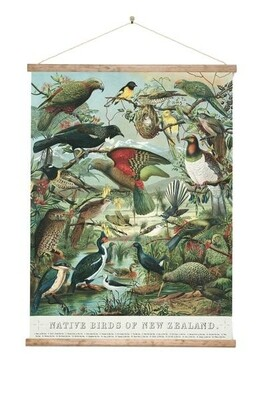 Native Bird Large Wall Chart