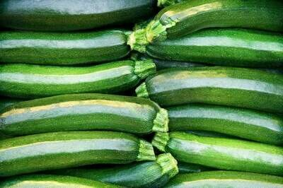 Jersey Green Zucchini