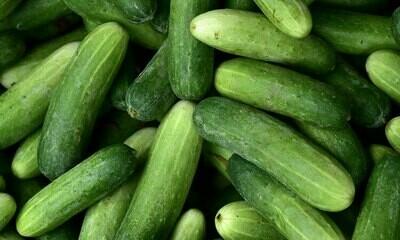 Jersey Cucumbers