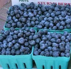 Jersey Blueberries (pint)