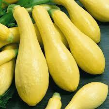 Jersey Yellow Squash