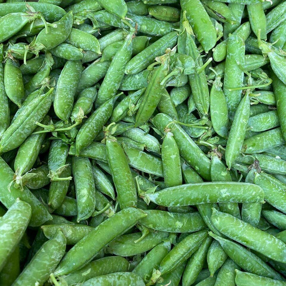 Jersey English Shelling Peas