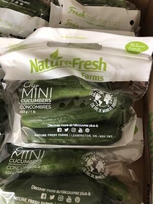 Cucumber - Mini Persian