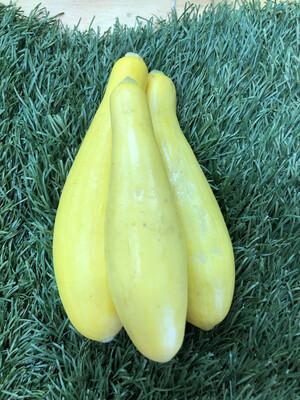 Squash - Yellow Summer,  Hlubik's