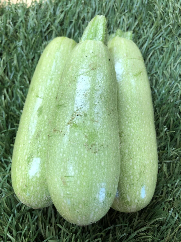 Zucchini - Light Green, 1lb