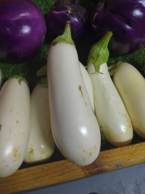 Eggplant -small, White, Hlubik's