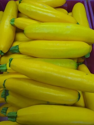 Zucchini - Yellow, Hlubik's