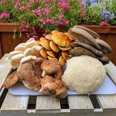Haw River Mushrooms Assortment