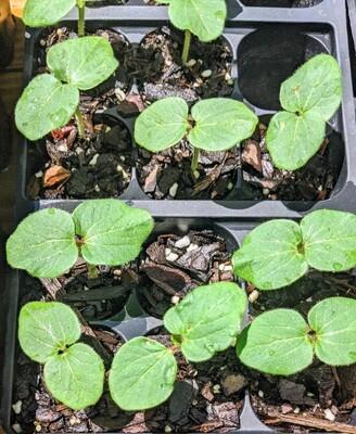 Garden Seedlings from Kindred Seedlings Farm