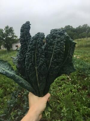 Dino Kale from Eat Dirt Farm