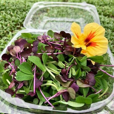Edible Flower Salad from East Branch Ginger