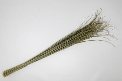 Kusha Grass