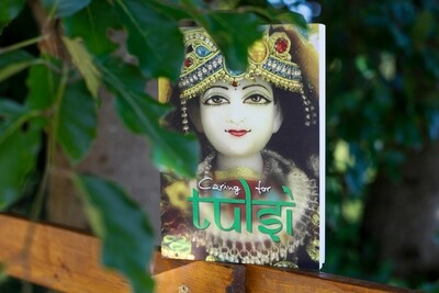 Caring for Tulsi