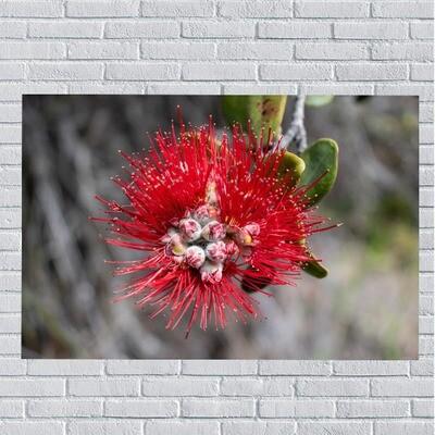 Hawaiian Red Flower