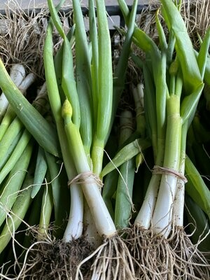 Fresh Scallions | Bunch | Tangerini's Own