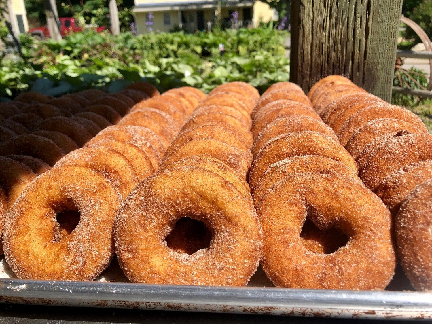 FP Cider Donuts | 6 Count
