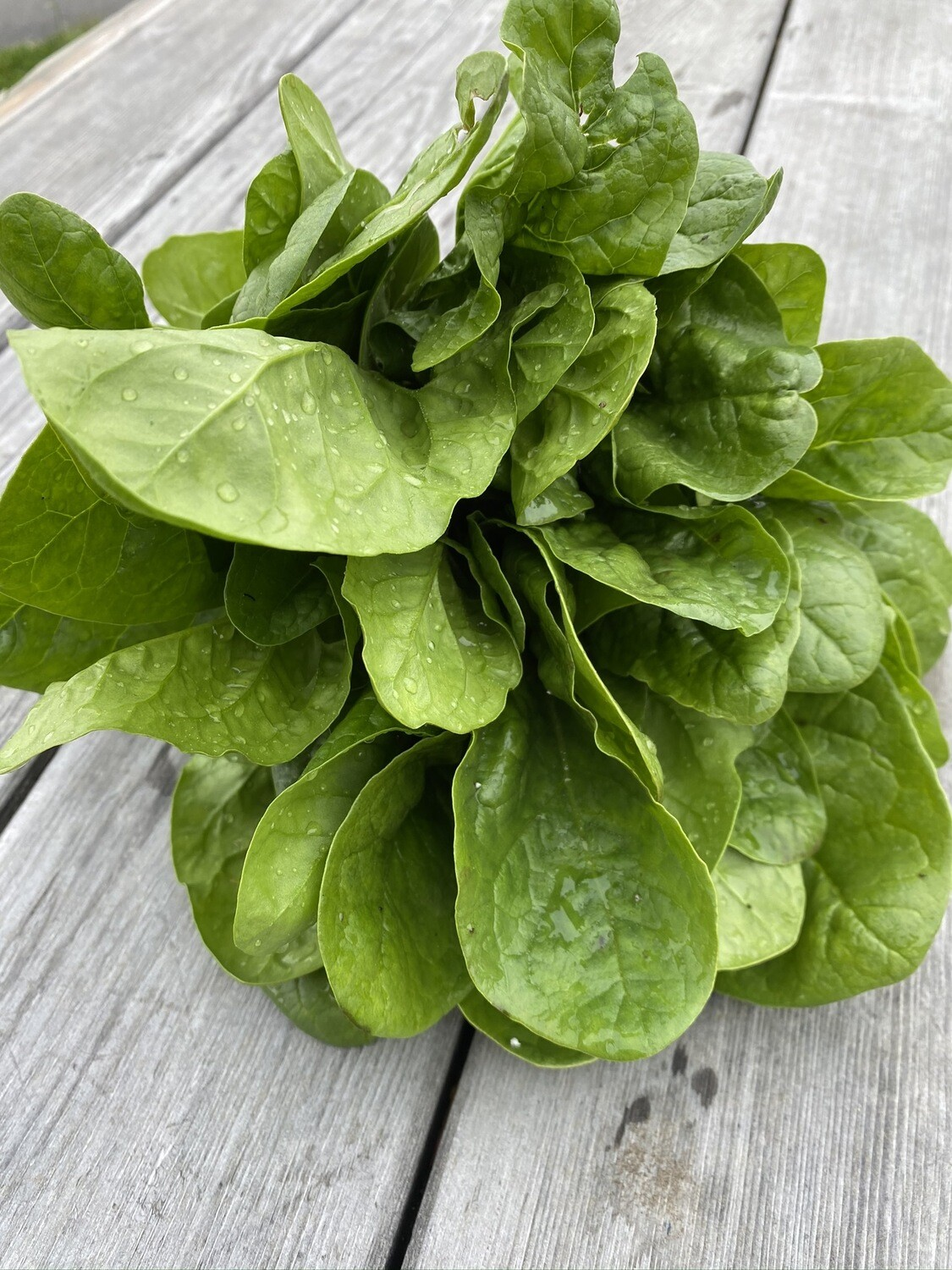 Spinach Bunch | Tangerini's Own