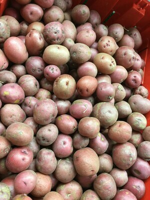 ONLINE - Small Red Creamer Potatoes - 2.99 Lb