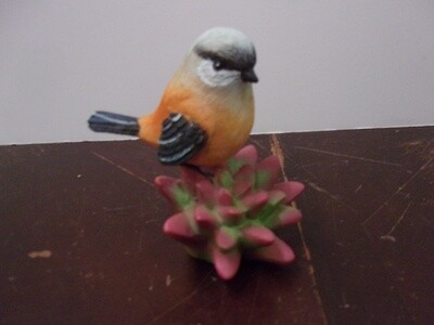 Bird on Succulent