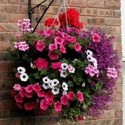 Basket & Patio  Plants 9cm Pot