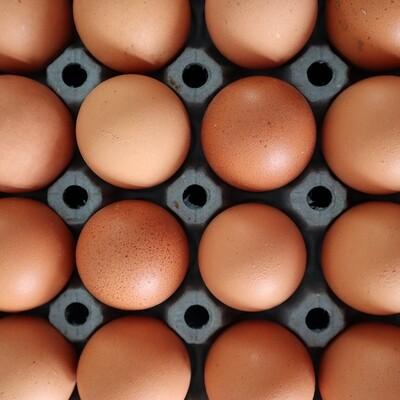 Eggs, Organic Free Range (6 medium) - bring an egg box