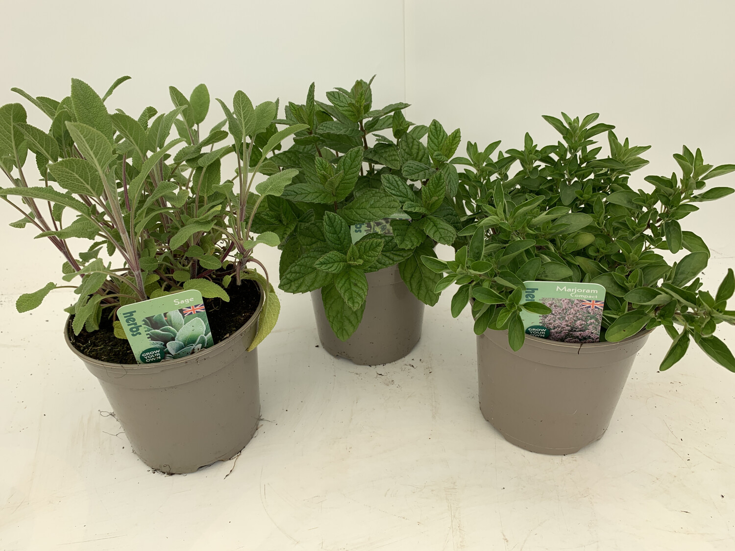 Herb Selection - Large Plants. X 6