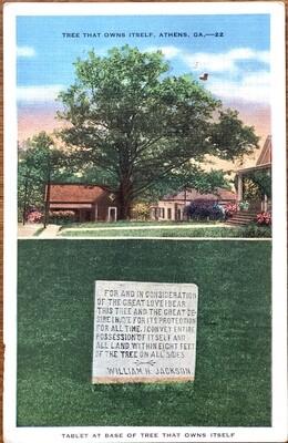 Tree That Owns Itself Athens GA Vintage Postcard